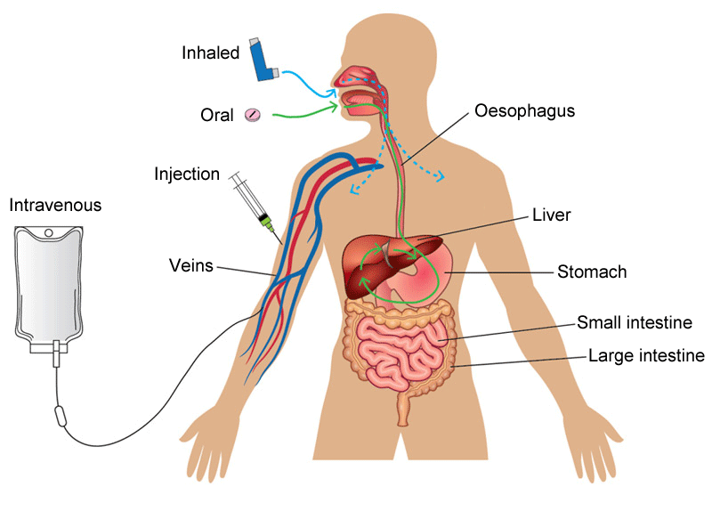 A diagram showing the various ways by which a medicine can be delivered into the body and, crucially, the bloodstream. Medicines can be inhaled, injected, taken orally or delivered via an intravenous drip. Medicines that are inhaled bypass cell membranes in the oesophagus into the bloodstream. Orally administered medicines are processed by the stomach and liver before entering the bloodstream. Injections and intravenous administrations deliver the medicines directly into the bloodstream.