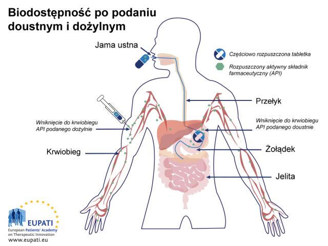 Schemat przedstawiający różnice wchłaniania pomiędzy tabletką podaną doustnie a dożylnym wstrzyknięciem bezpośrednio do krwiobiegu. Częściowo rozpuszczona tabletka przechodzi przez przełyk do żołądku; w żołądku rozpuszcza się całkowicie (także jej substancja czynna). Substancja czynna przechodzi następnie do krwiobiegu. Przy podaniu dożylnym natomiast substancja czynna trafia bezpośrednio do krwiobiegu.