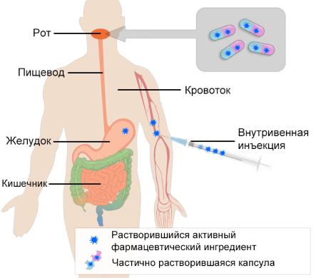 Схематическое изображение усвоения принятой перорально капсулы и инъекции, введенной непосредственно в кровоток (внутривенной инъекции). После попадания в желудок капсула переносится в тонкий кишечник, где происходит дальнейшее всасывание.